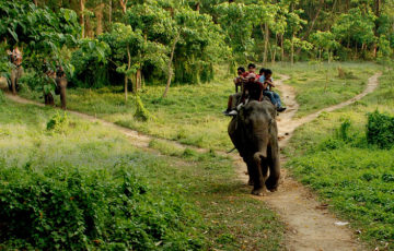 chitwan-jungle-safari pic